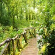 Wooden bridge in tropical rain forest — Stock Photo #52763943