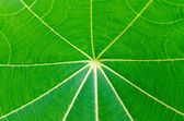 Close up full frame green leaf texture and background — Stock Photo