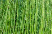 绿色的茎干抽象背景和纹理 — 图库照片