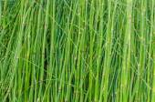 Green stems abstract background and texture — Stock Photo
