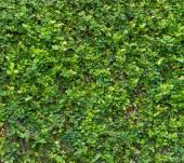Cespuglio verde. seamless texture piastrellabile — Foto Stock