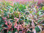 緑と赤の葉の背景 — ストック写真