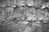 Lined dry leaves wall black white  background texture — Stock Photo