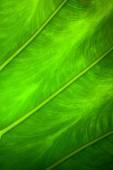 关闭了自然背光绿叶背景纹理 — 图库照片
