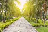 Concrete walkway with coconut trees — Stock Photo