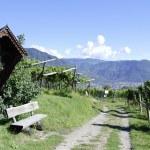 Постер, плакат: Vineyard in Girlan at the South Tyrol