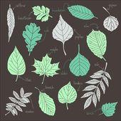 Vecteur série de feuilles — Vecteur
