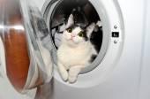 Cat in a washing machine — ストック写真