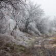 Trees and grass covered with frost — Stock Photo #61789787