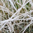 Grass covered with frost, winter landscape, macro image — Stock Photo #61789871