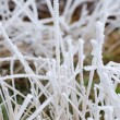 Dry grass covered with frost, rural landscape, macro image — Stock Photo #61789877