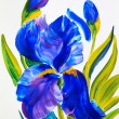 Watercolour painting -  bouquet of irises on a white background — Stock Photo #69323343