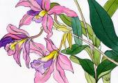 Watercolor painting of a bouquet of a lilac-pink orchids  — Stock Photo