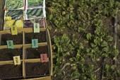 Seed tray — Stock Photo