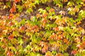Orange and green leaves — Stock Photo