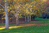 Trees with fallen leaves — Stockfoto