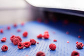 Frozen raspberry processing business — Foto de Stock