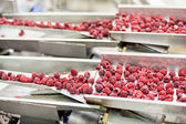Frozen raspberry processing business — Stock Photo