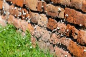 Orange old brick wall with snails — Stock Photo