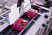 Frozen raspberry processing business — Stock Photo