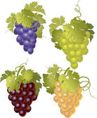 Vector set of bunches of grapes. — Stock Vector