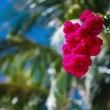 Beautiful red flowers swaying in the breeze. Blue sky and palm trees in the background. Summer vacation concept. — Stock Video #55280079