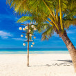Dream scene. Beautiful palm tree over white sand beach. Summer n — Stock Photo #63791387