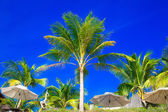 Palm trees and sun umbrellas on a tropical beach, the sky in the — Stock Photo
