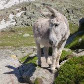Grey donkey on stone — Stock Photo