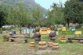 Apiary in apple tree garden — Stock Photo