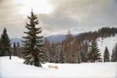 Foresta in alpi austriache — Foto Stock