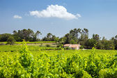 House with vineyard, Rhone valley — Stock Photo