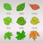 Seasonal leaf set — Vettoriale Stock
