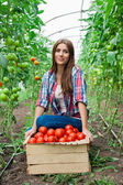 Young smiling agriculture woman worker and a crate of tomatoes in the front, working, harvesting tomatoes in greenhouse. — Stock Photo