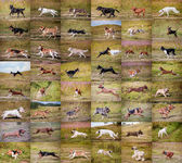 Collage dogs running — Stock Photo