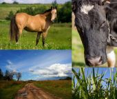 Cow, horse, grass, summer pasture — Stock Photo