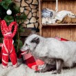 Polar or arctic fox, holidays, christmas, new year — Stock Photo #60971193