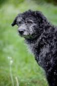 Mixed breed dog on grass — Stock fotografie