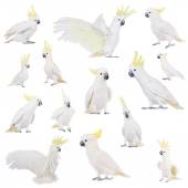 Sulphur-crested Cockatoo, isolated on white  — Stock Photo