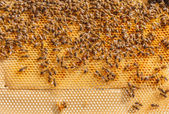 Bees working on honeycomb, swarming — Stockfoto