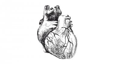 Animation of drawing human heart — Stock Video