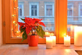 Poinsettia and candles — Stock Photo