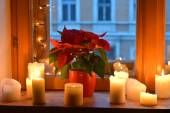 Candles and red poinsettia — Stock Photo