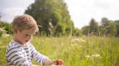 Little boy walking through tall grass — Stock Video