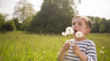 Little boy blowing many dandelions in the park — Stock Video