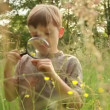 Boy Inspecting Flower with Magnifying Glass — Stock Video #53105185