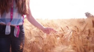 Girl Walking Through Wheat Fields — Stock Video