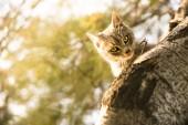 木の上の猫 — ストック写真