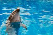 Dolphin looking up — Stock Photo