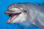 Smiling dolphin — Stock Photo